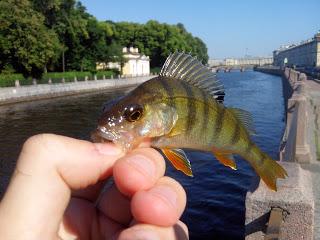 Спиннинг на реке Фонтанка. Ловим, и любуемся центром Петербурга.