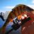 Малая Невка. Рыбалка у Петровского моста. Пляжный спиннинг.