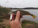 Рыбалка на Орловском карьере. Когда даже ультралайт не спасает.